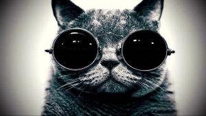 gatto-funky